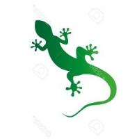 The Geckos Music Performance