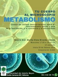 Body Metabolism / Metabolismo del cuerpo