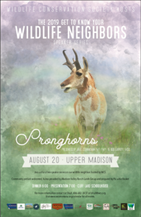 Summer Wildlife Speaker Series: Pronghorn