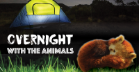 Overnight with the Animals