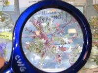Spring Wildflower Exhibit