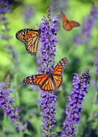 Butterfly Walk at Boyce Thompson Arboretum