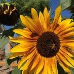 FREE Master Gardener Class: Going Wild for Flowers