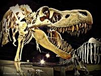 Arizona Museum of Natural History